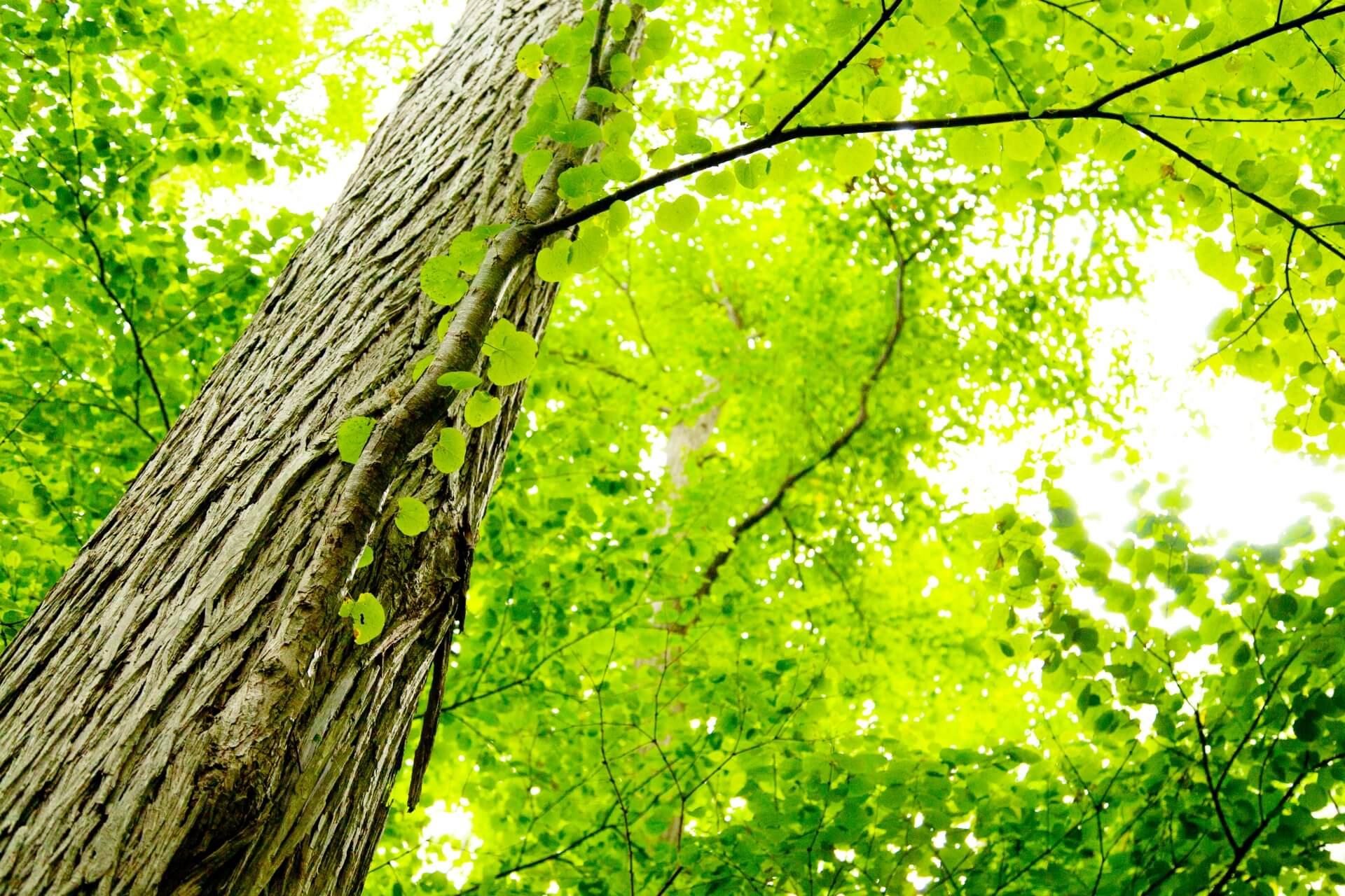 須山木材株式会社イメージ画像
